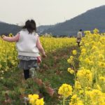笠岡ベイファームで菜の花を見て感心したこと