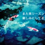 日刊わしら、広島好きは使ってもええかもね。