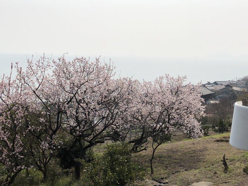田尻町杏まつり