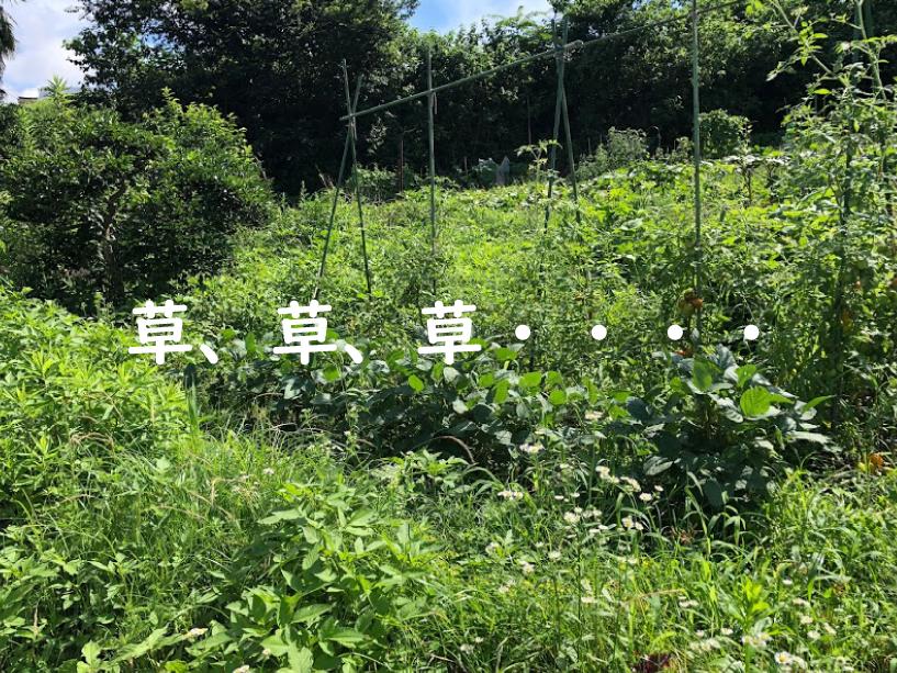 夏野菜高騰