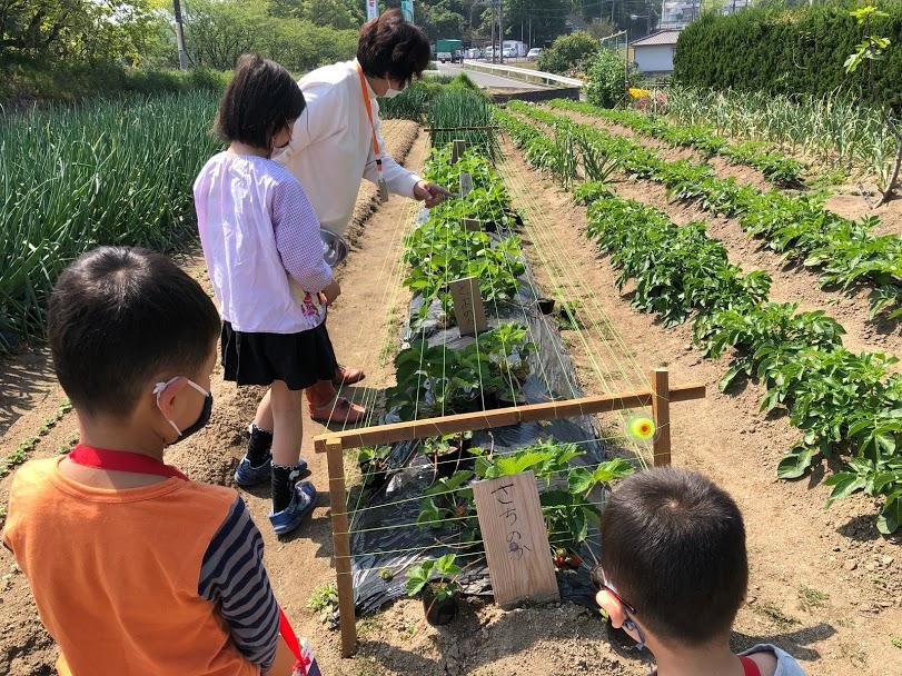 フジヒロ野菜収穫