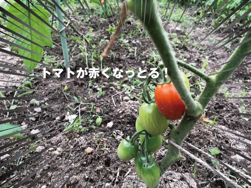 福山市ブログ集客