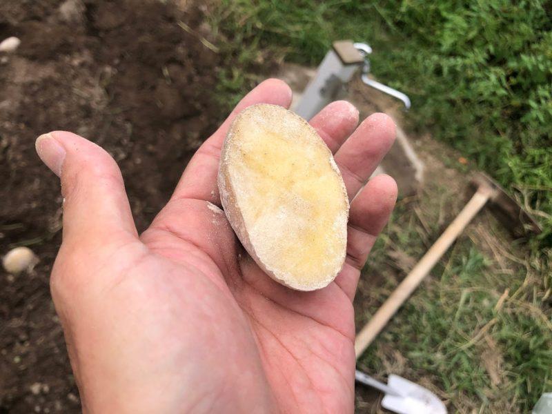 ジャガイモ植え方
